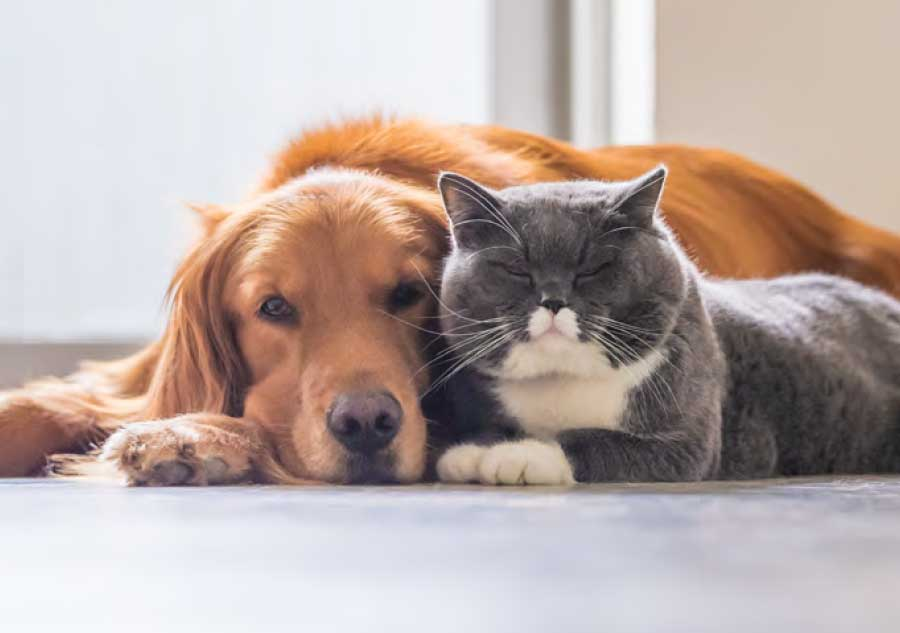 dog_and_cat_laying_next_to_each_other