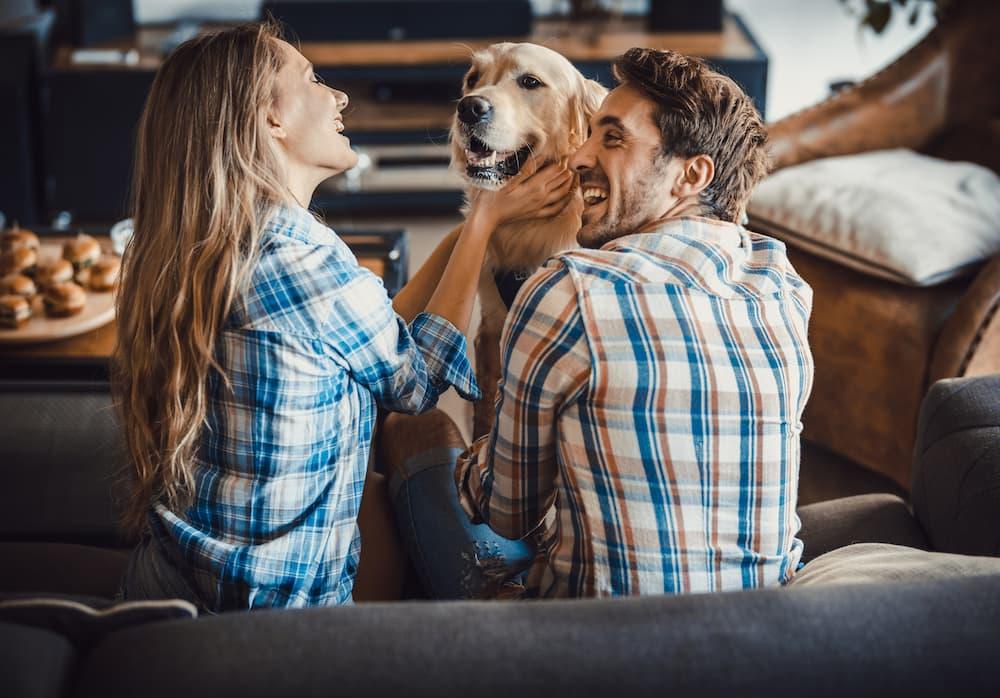 pet-friendly-living